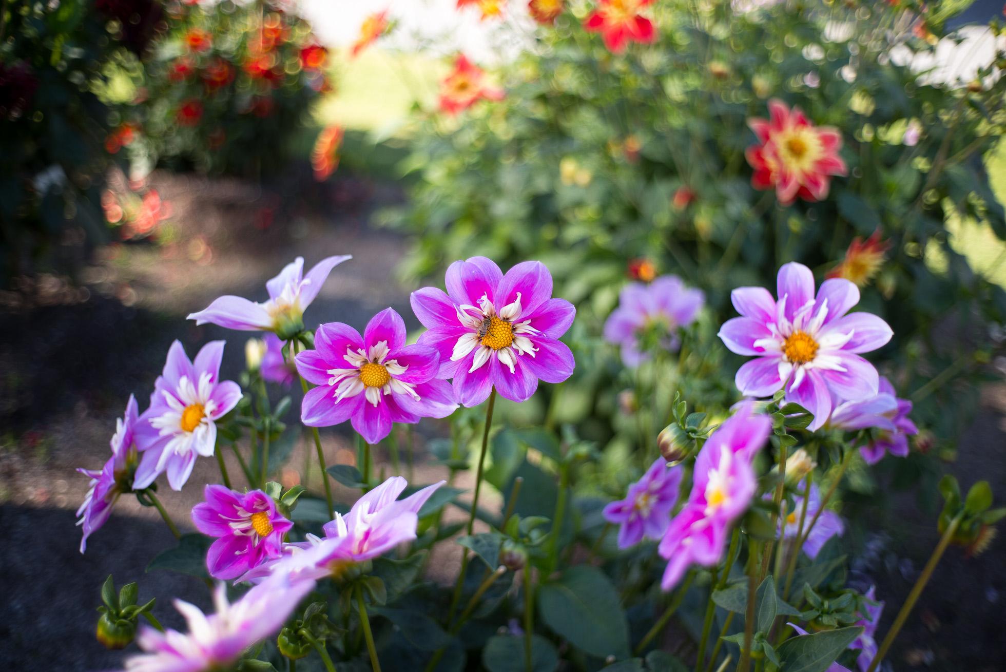 2016-09-18-bergianska-garden_2016-09-18_max-dahlstrand_0015