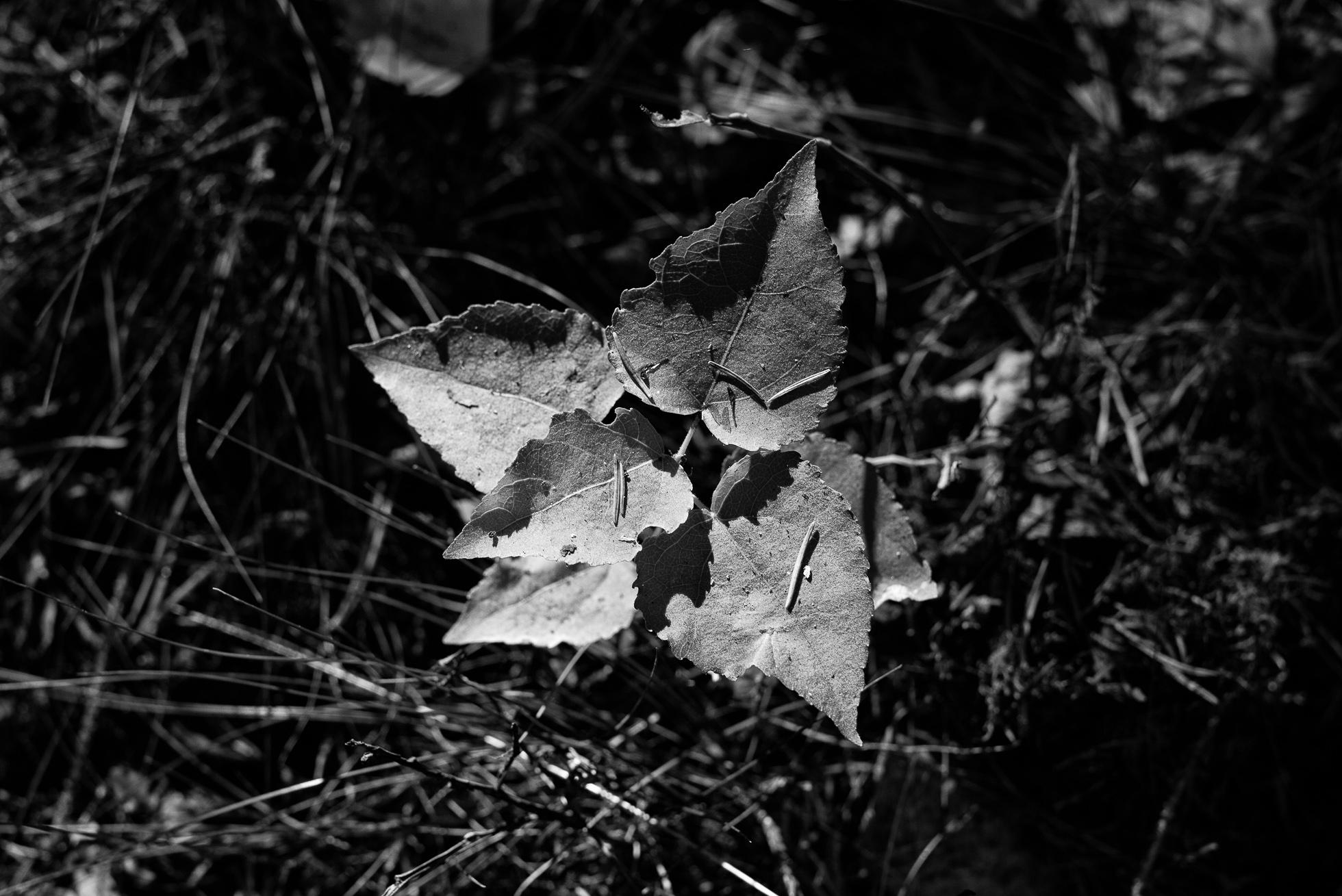 2016-10-01-skogspromenad-mortsjon__2016-10-01__0035-redigera