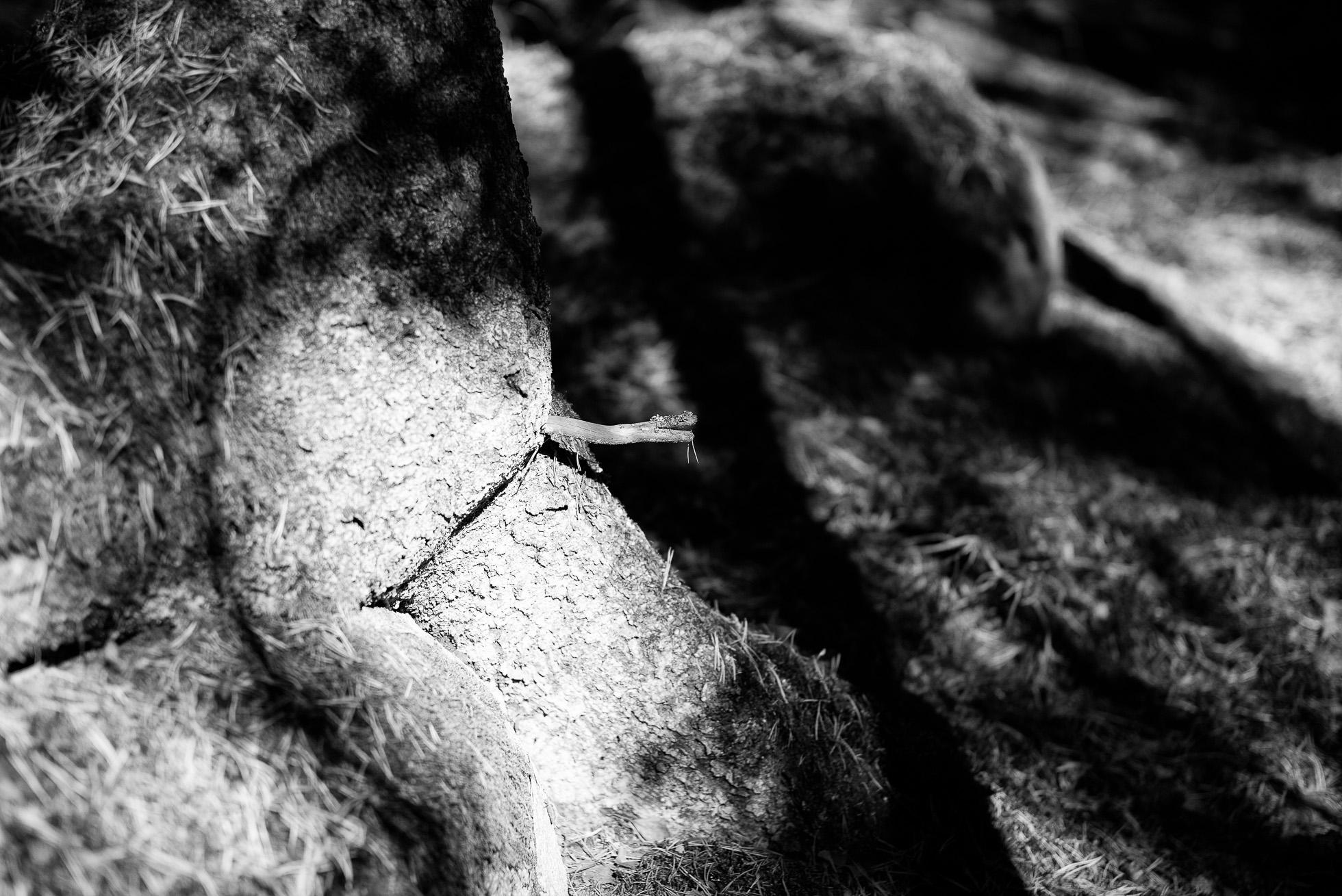 2016-10-01-skogspromenad-mortsjon__2016-10-01__0041-redigera