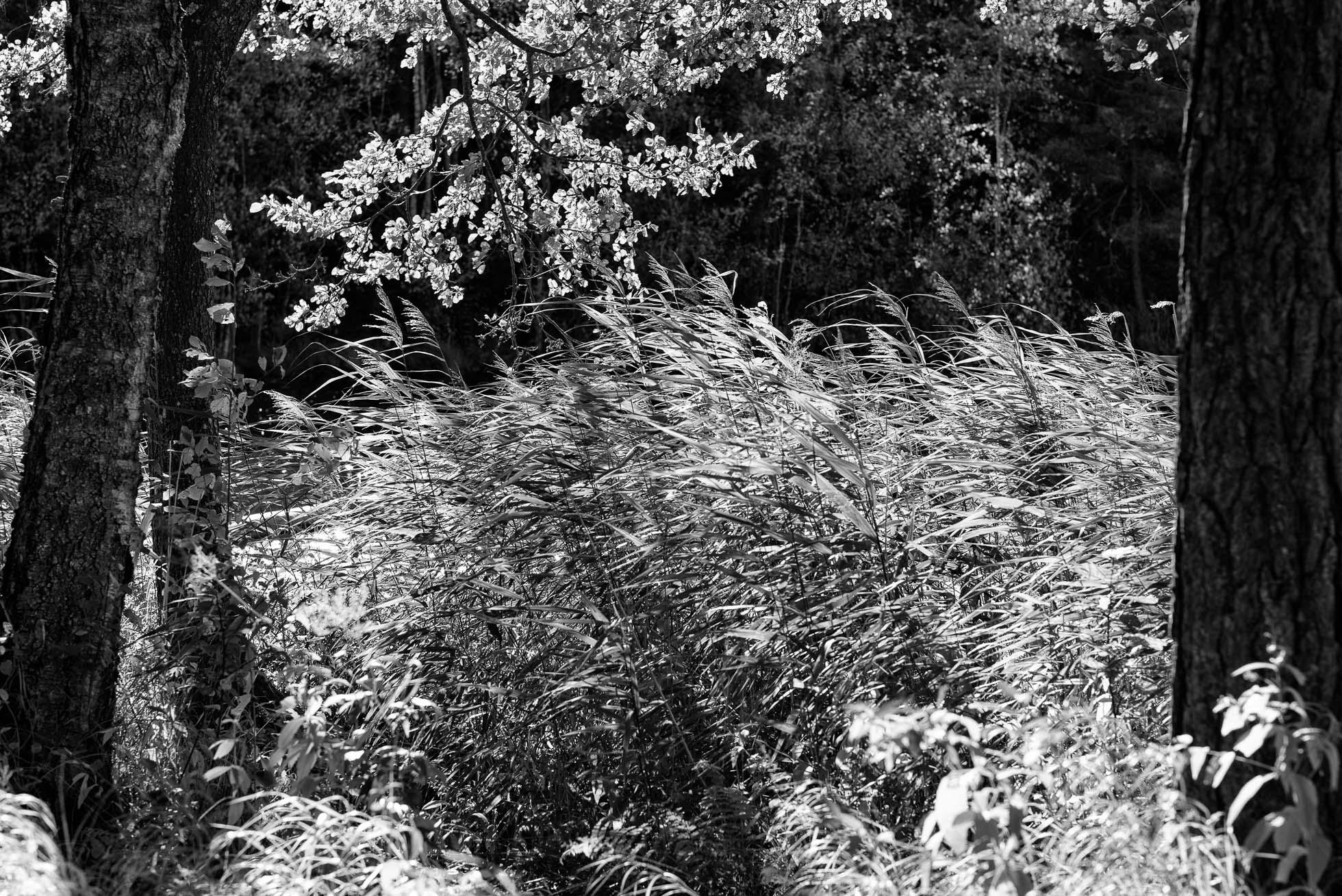 2016-10-01-skogspromenad-mortsjon__2016-10-01__0057-redigera