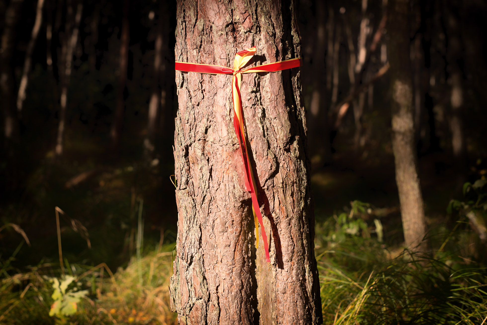 2016-10-01-skogspromenad-mortsjon__2016-10-01__0058-redigera